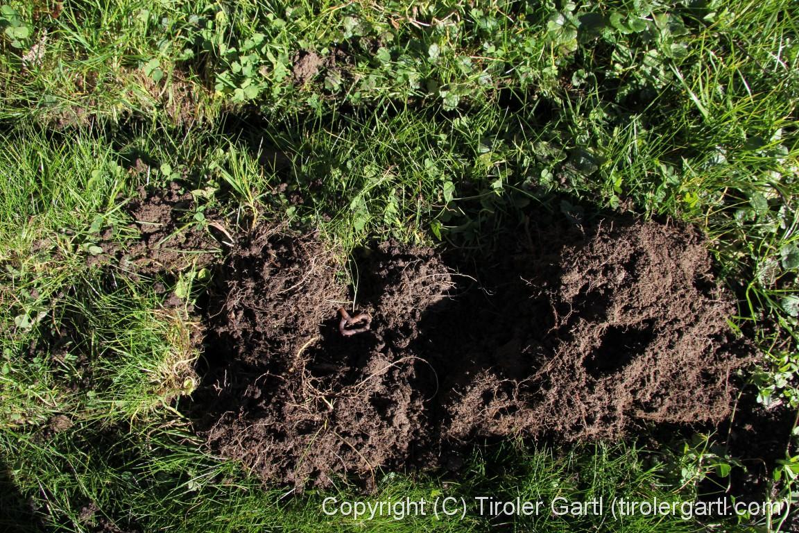 Gartenbeete Anlegen Tiroler Gartl